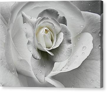 Tears In The Rosegarden Canvas Print by Joachim G Pinkawa