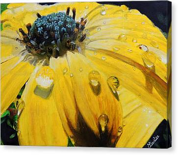 Tears Of The Sun Canvas Print by Maritza Tynes