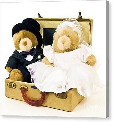 Teddy Bear Honeymoon Canvas Print by Edward Fielding