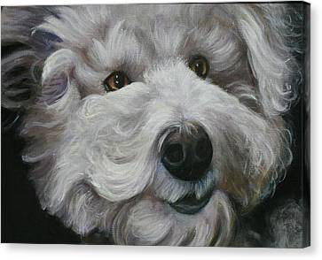 Canvas Print featuring the painting Teddy The Bichon by Melinda Saminski