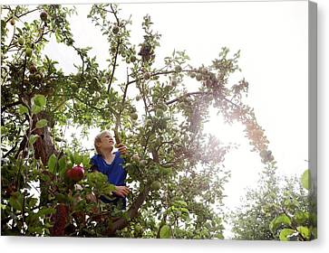 Youthful Canvas Print - Teenage Boy Climbing An Apple Tree by Thomas Fredberg