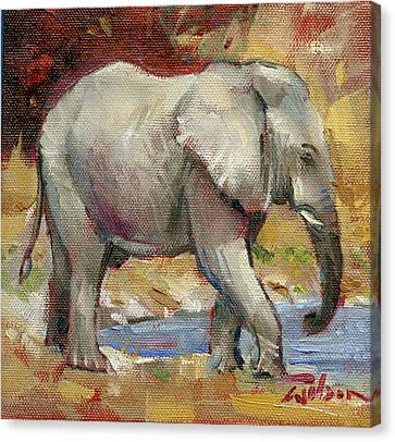 Teenage Tusker Canvas Print by Ron Wilson