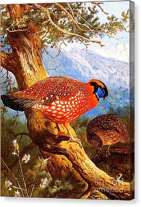 Temmincks Tragopan Canvas Print by Pg Reproductions