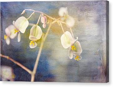Blue Begonia Canvas Print - Tender Begonia by Jan Amiss Photography
