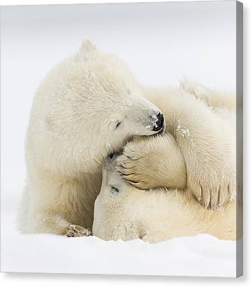 Marine Mammals Canvas Print - Tender Embrace by Tim Grams