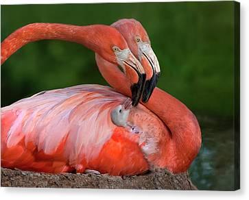 Ducklings Canvas Print - Tender Love by Xavier Ortega