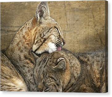 Tender Loving Care Canvas Print