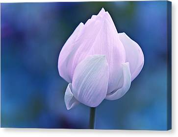 Tender Morning With Lotus Canvas Print by Jenny Rainbow