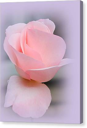 Tenderness Of A Rose Canvas Print by The Art Of Marilyn Ridoutt-Greene