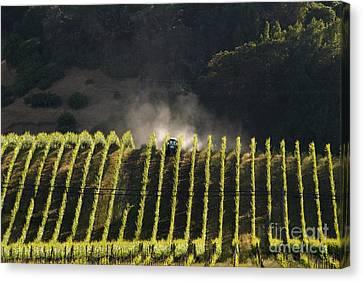 Tending A California Vineyard Canvas Print by Ron Sanford
