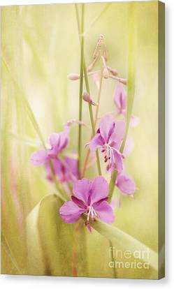 Tendresse Canvas Print