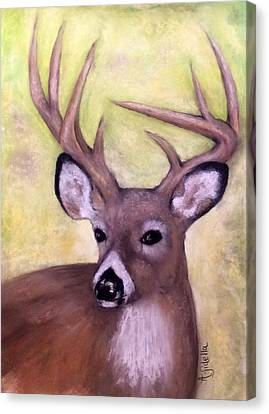 Tennessee Wild Life - Buck Canvas Print by Annamarie Sidella-Felts