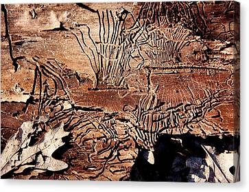Termite Trails Canvas Print by Kevin Grant