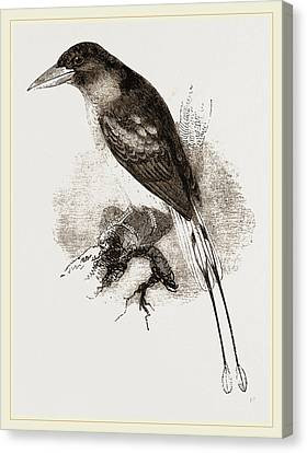 Ternate Kingfisher Canvas Print by Litz Collection