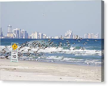 Terns On The Move Canvas Print