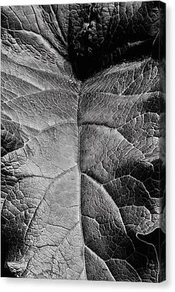 Terrestrial  Canvas Print