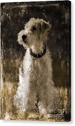 Terrier Antique Canvas Print