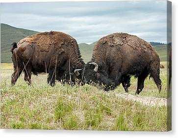 Canvas Print featuring the photograph Test Of Strength by Jack Bell