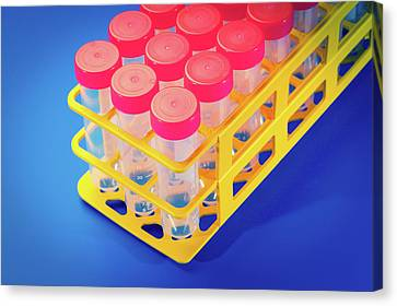 Test Tubes In A Rack Canvas Print