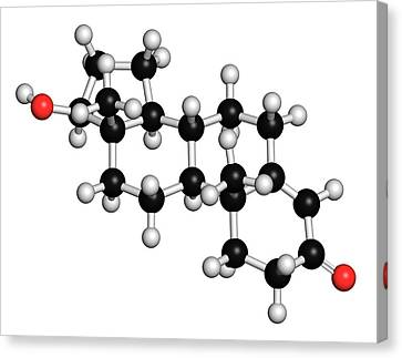 Testosterone Molecule Canvas Print by Molekuul