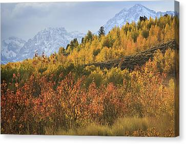 Teton Fall Canvas Print by Jennifer Grover