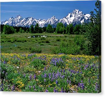 Teton Grandeur Canvas Print by Ed  Riche