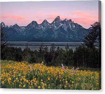 Teton Spring Canvas Print by Leland D Howard