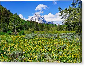 Teton Wildflowers Canvas Print by Greg Norrell