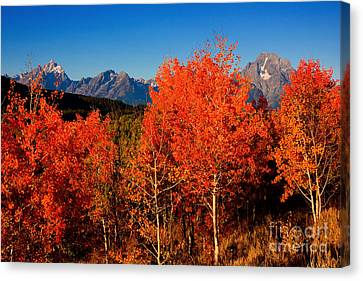 Canvas Print featuring the photograph Tetons Colors Of Autumn by Aaron Whittemore