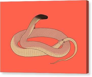 Tetrapodophis Prehistoric Snake Canvas Print by Nemo Ramjet