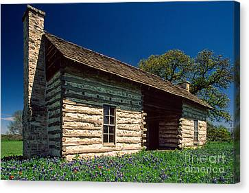 Texas Beginnings Canvas Print by Inge Johnsson