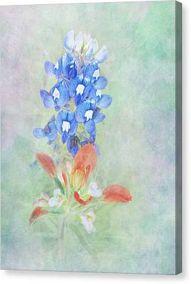 Texas Bluebonnet And Indian Paintbrush Canvas Print by David and Carol Kelly