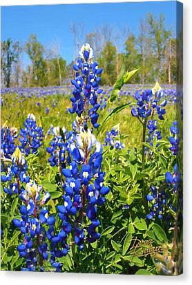 Texas Bluebonnet Canvas Print by Doug Kreuger