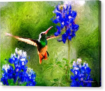Da161 Texas Bluebonnet Hummingbird By Daniel Adams Canvas Print