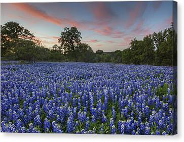 Texas Bluebonnet Images - Evening In The Texas Hill Country 1 Canvas Print by Rob Greebon