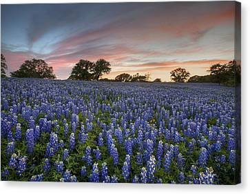Texas Bluebonnet Images - Evening In The Texas Hill Country 2 Canvas Print by Rob Greebon