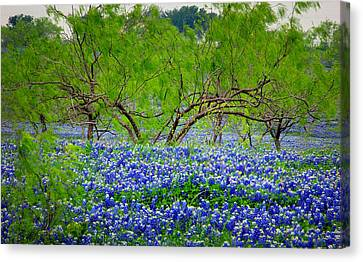 Canvas Print featuring the photograph Texas Bluebonnets - Texas Bluebonnet Wildflowers Landscape Flowers by Jon Holiday