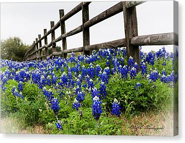 Texas Bluebonnets Canvas Print by Allen Biedrzycki