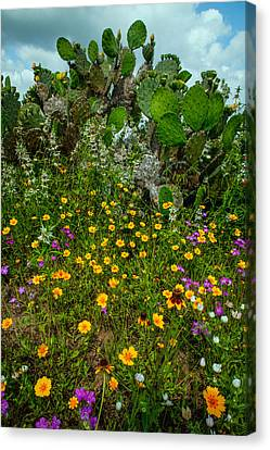 Texas Bouquet II Canvas Print