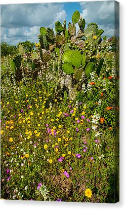Texas Bouquet Canvas Print