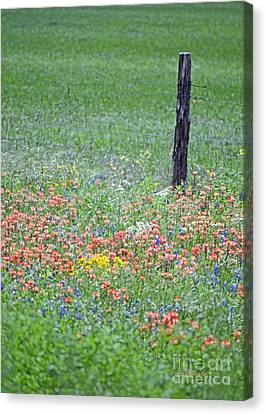 Texas Fencepost And Spring Pastels Canvas Print