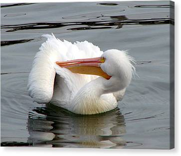 Canvas Print featuring the photograph Texas Gulf Coast White Pelican by Linda Cox