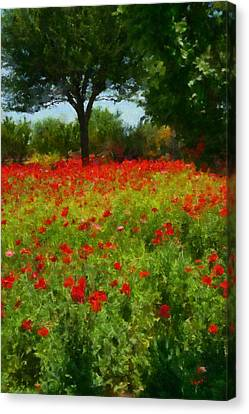 Texas Hill Country Corn Poppies Canvas Print