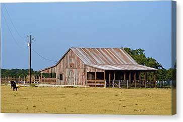 Texas Longhorn Barn Canvas Print by Dan Terry