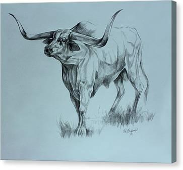 Texas Longhorn Canvas Print by Derrick Higgins