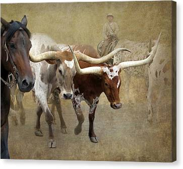 Longhorn Canvas Print - Texas Longhorns by Angie Vogel