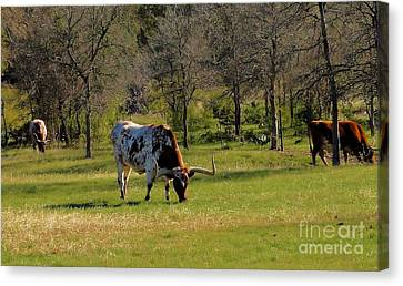 Texas Longhorns Canvas Print by Janette Boyd