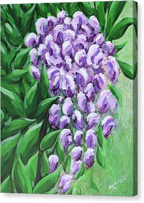 Texas Mountain Laurel Canvas Print by Kume Bryant