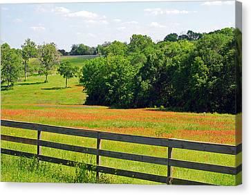 Texas Prairie - Gentle Hills In Springtime Canvas Print