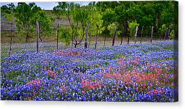 Canvas Print featuring the photograph Texas Roadside Heaven -bluebonnets Paintbrush Wildflowers Landscape by Jon Holiday